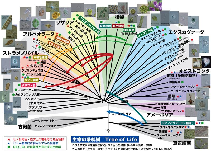 Tree to Strain
