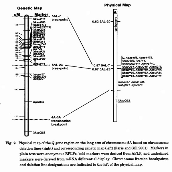 1.html Gene Maps Are Based On on plasmid map, concept map, symptom map, chromosome map, library map, norman map, order genetic map, antigen map, human genetic map, dna map, genetic code map, sequencing map, ebola outbreak 2014 map, patricia map, europe genetic map, genome map, person standing on a map, cloning map, vector map, hierarchy map,