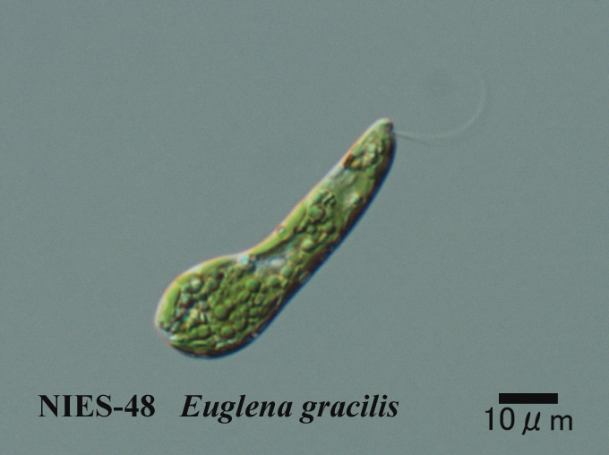 1000  Images About Protists