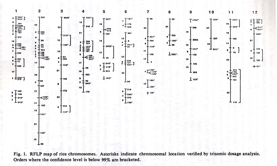 45. RFLP map of rice chromosomes Chromosomal Map on neurological map, 15 chromosome map, infection map, human chromosome map, genetic disorders of chromosome map, chromosome 7 map, gene map, down syndrome map, endocrine map, latitudinal map,