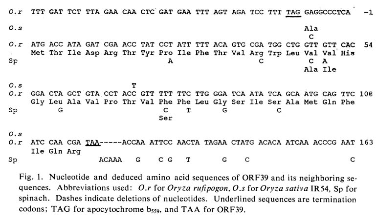 Codon Amino Acid Abbreviations Part - 17: This work was supported by grant RF84066, Allocation No. 3, from the  Rockefeller Foundation. J.-C. Cote acknowledges support from Agriculture  Canada, ...